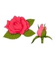 Vintage rose flower vector image vector image