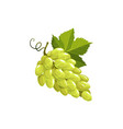grape fruit green or white grapes food vector image vector image