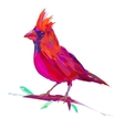 The cute red cardinal exotic bird vector image vector image