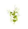 branch with ripe green peas pods and leaves vector image