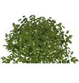 plant green bushy shrub vector image