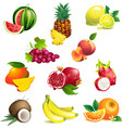 set tropical fruits with leaves and flowers vector image