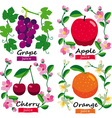 Fruits and flowers set vector image