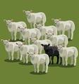 Animal sheep black on green vector image vector image