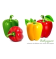 Bell peppers vector image vector image