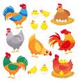 cute domestic chicken farm breeding hen poultry vector image vector image