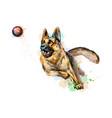 german shepherd dog playing vector image
