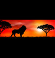 african lion on sunset background vector image vector image