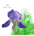 Iris with green watercolor background-04 vector image vector image