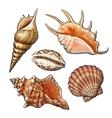 Set of various beautiful mollusk sea shells vector image
