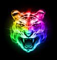 head of tiger blazing in spectrum fire on black vector image