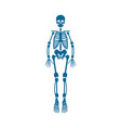 human skeleton blue color vector image vector image