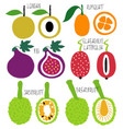 brush grunge exotic fruits icons set vector image