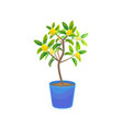 plant growing lemon tree in pot vector image