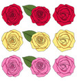 set color with roses and leaves vector image