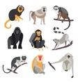 Set of Apes and Monkeys vector image