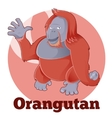 ABC Cartoon Orangutan vector image vector image