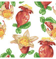 blooming fruit flower of pomegranate tree in vector image