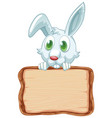 board template with cute rabbit on white vector image vector image