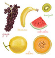 exotic juicy delicious fruits vector image vector image