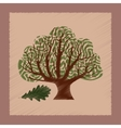 flat shading style plant Quercus vector image