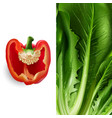 lettuce and tomato vector image vector image