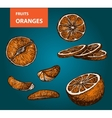 Oranges - set of vector image vector image