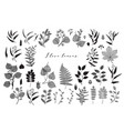 big set branches and leaves fall spring vector image