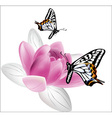 butterflies and lotus on white background vector image vector image