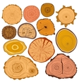 Tree wood slices set vector image