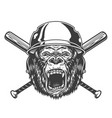 angry gorilla head in baseball helmet vector image