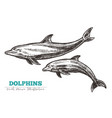 hand drawn dolphins vector image vector image