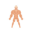 human biological nervous system anatomy human vector image