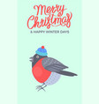 merry christmas bullfinch vector image vector image