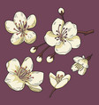 sakura flower set vector image vector image