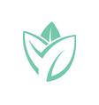 Leaf Mint vector image vector image
