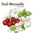 realistic sketch of mozzarella vector image
