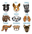 various dog head set vector image vector image