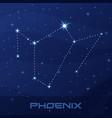 constellation phoenix night star sky vector image vector image