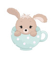 cute baby boy rabbit inside the cup pastel colors vector image