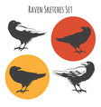 raven or black crow bird ink drawing sketch vector image