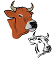 Cows head vector image vector image