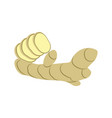 ginger root isolated icon vector image vector image