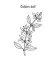 golden bell forsythia suspensa medicinal plant vector image vector image