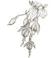 Hand Drawn Fuschia Flower Sketch vector image vector image
