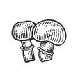 porcini mushroom sketch engraving vector image