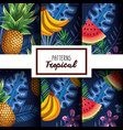 set tropical and exotic fruit with floral vector image