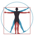 vitruvian man leonardo da vinci human body vector image vector image