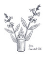 drawing sage essential oil vector image vector image