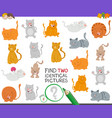 find two identical cats game for children vector image vector image